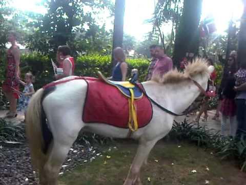 sewa kuda jual kuda hp 085711119966 youtube rh youtube com Anak Harimau harga anak kuda paling murah