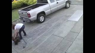 Собаки(Питбули) напали на кошку / Womans pitbulls savagely attack a cat