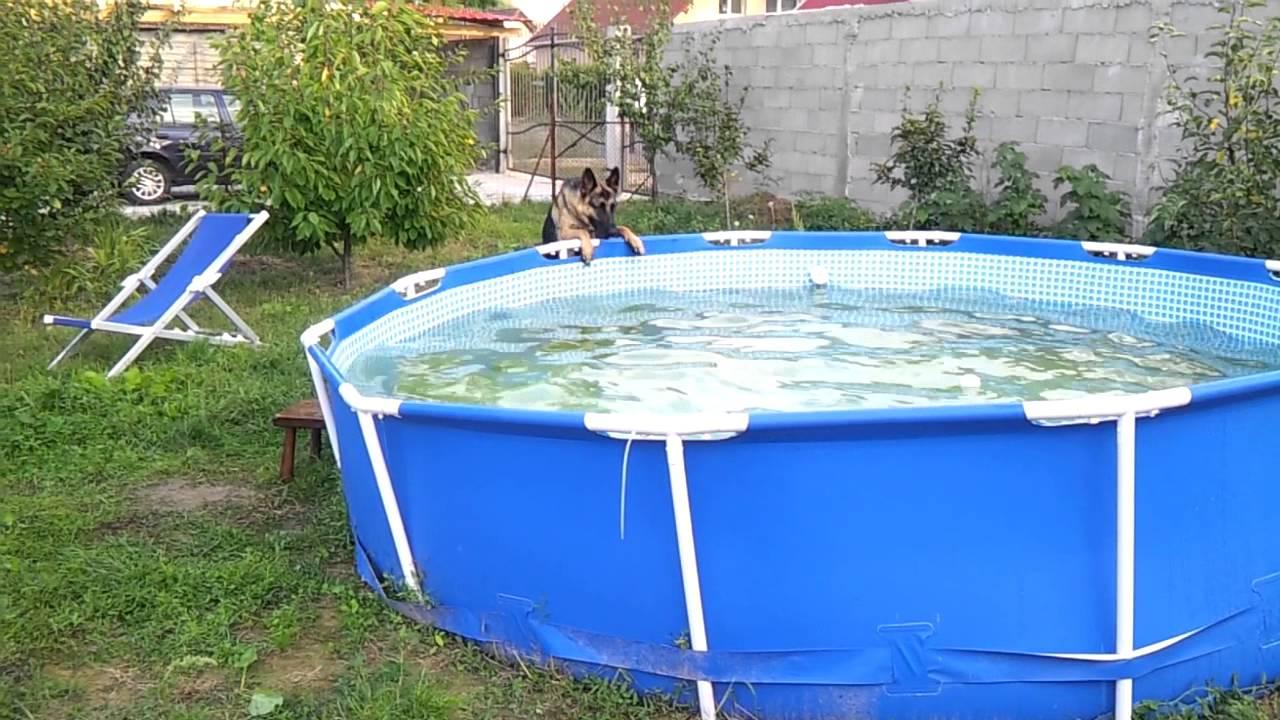 Pastore tedesco bagno piscina youtube - Bagno in tedesco ...