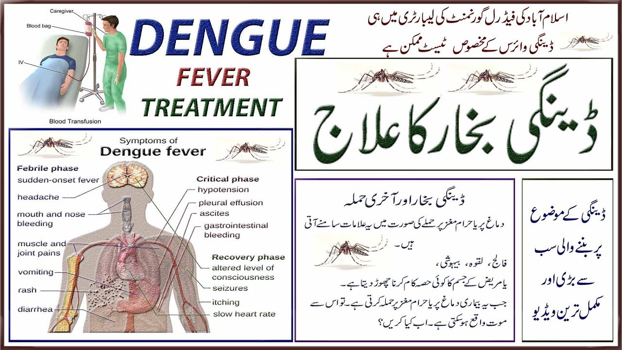 bibliography dengue fever Dengue fever is a flu-like viral disease common throughout the tropical and sub-tropical regions around the world, mainly in urban and peri-urban areas today, it afflicts an estimated 50 million to 100 million in the tropics (epstein, 2000.