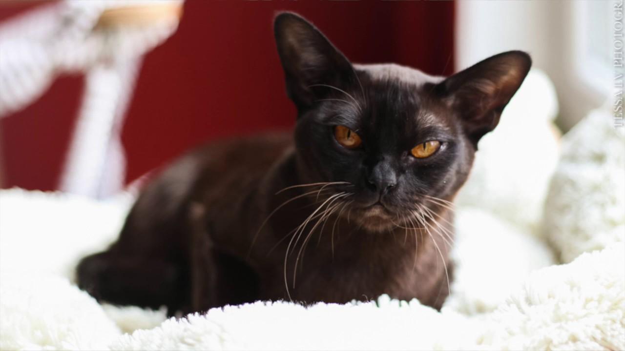 Стенд Шотландских кошек на выставке ИнфоКот 2012 - YouTube
