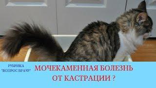 09.02.18 Мочекаменная болезнь котов