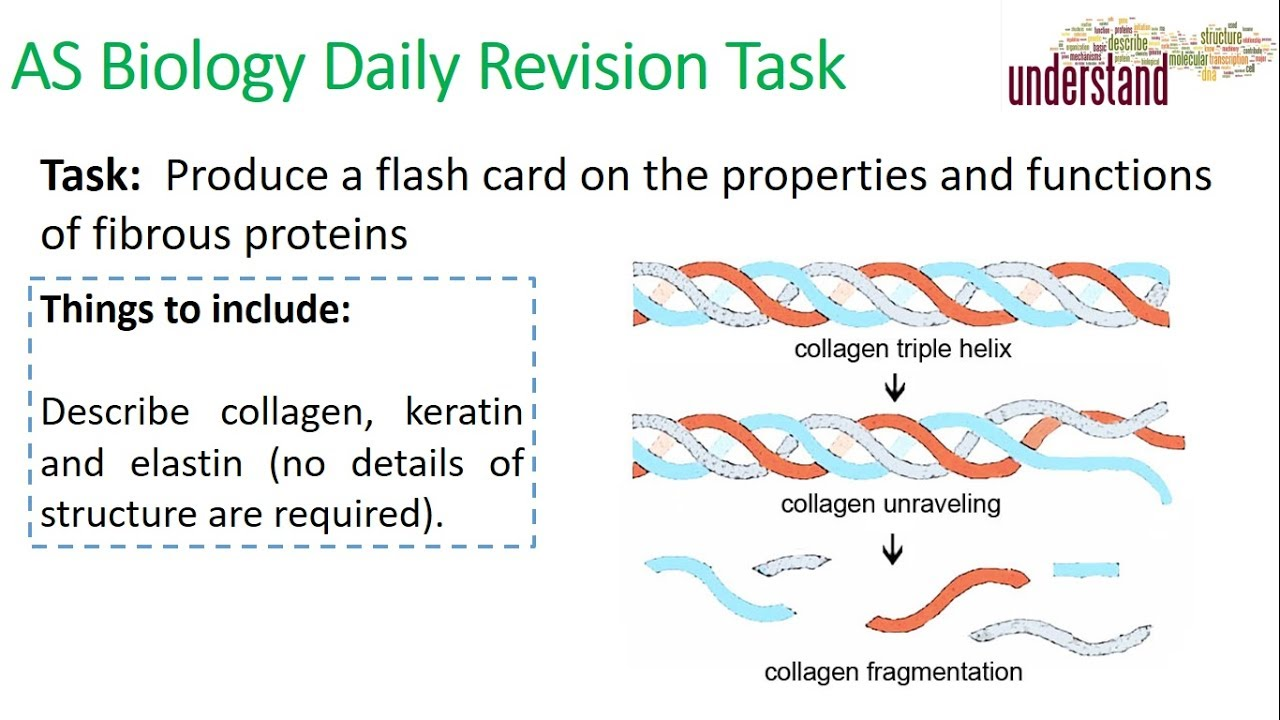 AS Biology Daily Revision Task 23:  Fibrous Proteins - YouTube