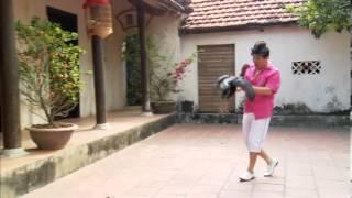 Trailer Hài xuân: Xuan hinh 2013. Đạo diễn: Phạm Đông Hồng