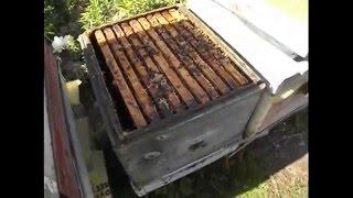 видео Отзывы Улей 12 рамочный + 2 магазина (Дадан. Цена от 3 шт) - Магазин - Пчеловодство. Купить ульи. Продажа ульев. Цена на ульи