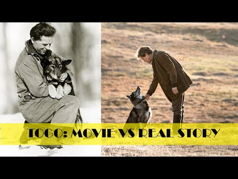 Togo Movie vs Original Story || A must Watch for Dog Lovers || True Story || Togo Movie Best Scenes