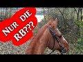 Nur Eine Rb?? - Reitbeteiligung Auf Augenhöhe?!  Ausreitvlog    Serenity Horses