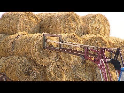 В хозяйствах Волгоградской области идет заготовка кормов