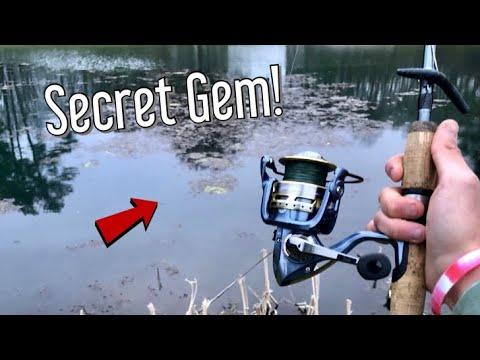 This Pond Has CRAZY Fish Lurking (Surprise Catches!)