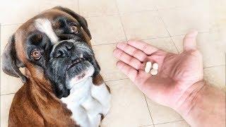 Как дать таблетку собаке