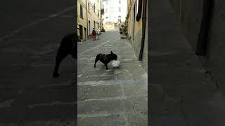 FUNNY ANIMALS football dog  ANIMALI DIVERTENTI cane calciatore СОБАКА-ФУТБОЛИСТ