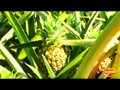 Del Monte Gold® Extra Sweet Pineapple