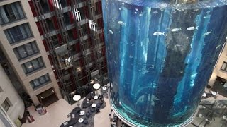 Exklusive Einblicke in die Tiefen des AquaDom in Berlin