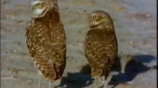 В мире животных 18+(В мире животных (18+), 2016-07-05T19:09:07Z)