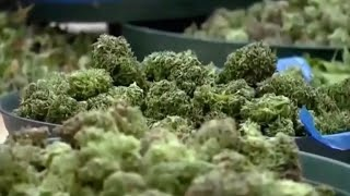 AG Sessions to roll back Obama-era policy on marijuana