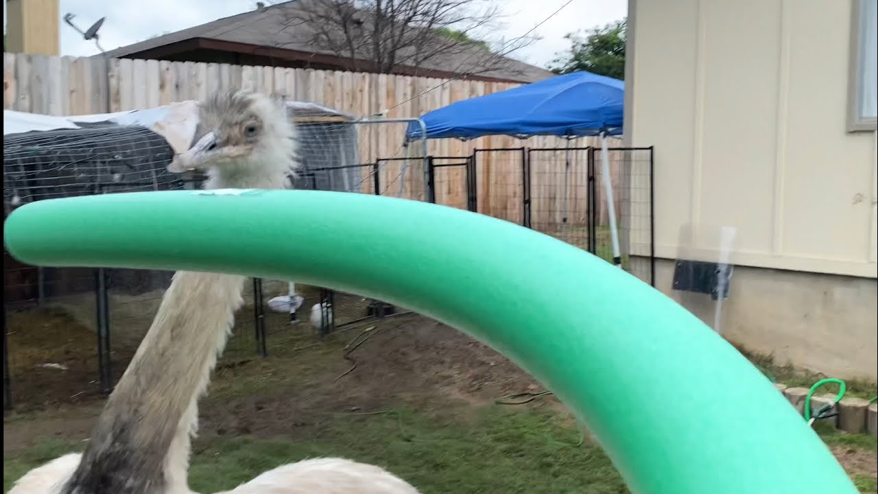Kevin vs Pool Noodle (pool party gone SUS??) *PETA Approved!*