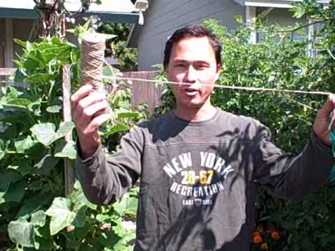 Plant Ties to Secure Your Plants to a Trellis When Growing Vertically