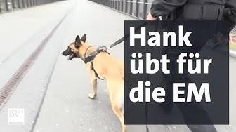 Polizeihund Hank im Sicherheits-Training für die EM 2020 | BR24