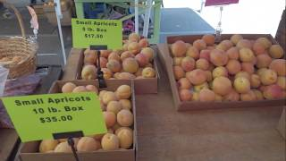 Муниципалитет торгует абрикосами из городского сада - Саннивейл, Калифорния