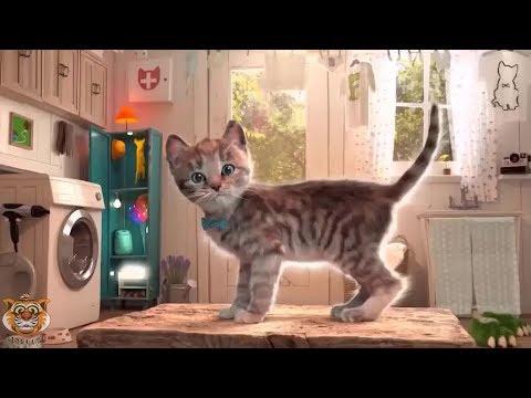 kucing-lucu-animasi-game-edukasi-film-kartun-anak