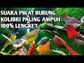 Suara Pikat Burung Kecil Di Hutan Paling Ampuh Di Jamin Lengkett  Mp3 - Mp4 Download