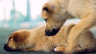 Он уговаривал мальчика не брать больного щенка. Но ответ поразил его до слез...