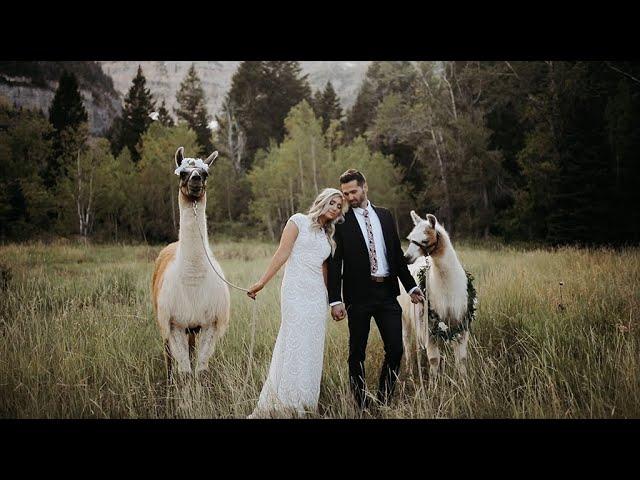 They Had Llamas At Their Elopement! | Romantic Boho Mountain Elopement | Utah Elopement