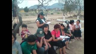 Cultivation of tara for reforestration in El Agustino, Lima, Peru