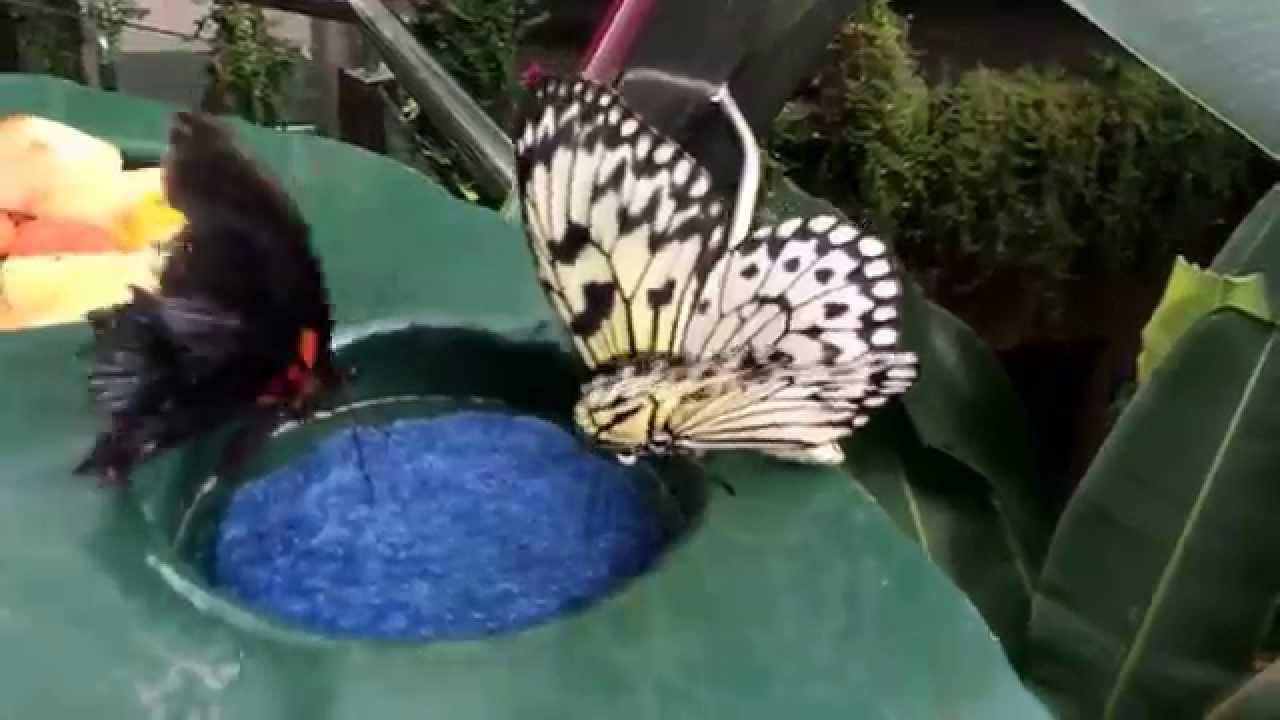 Butterfly Rainforest At Otago Museum