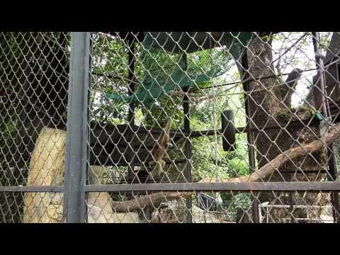 myanmar zoo monkeys