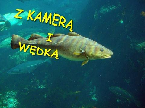 Wyprawa na dorsze. Kołobrzeg 17.02.2017| Wędkarstwo morskie from YouTube · Duration:  27 minutes 37 seconds