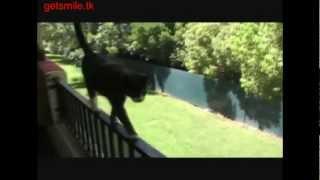 Невероятные кошки 2, прикольное видео