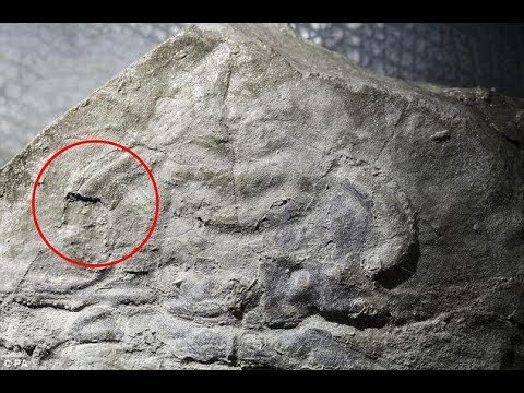 The Hidden Secret of Life 4 Billion Years Ago (720p)