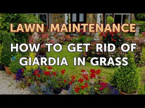 Get rid of giardia in your yard