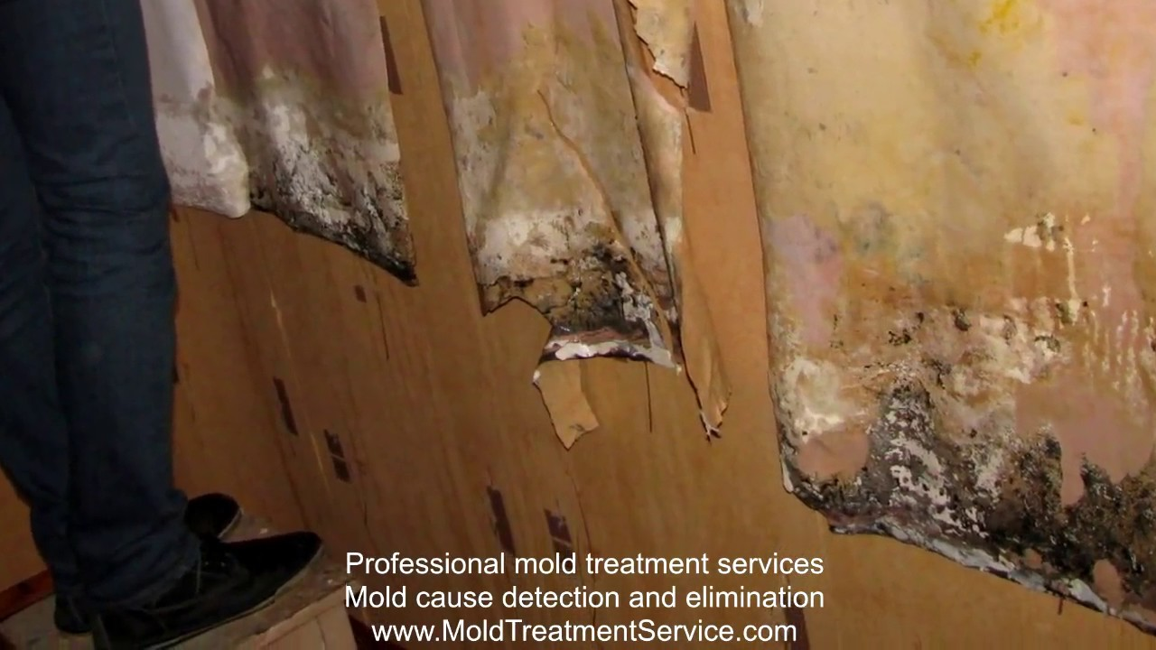 Mold removal from the wall under wallpaper. www.MoldTreatmentService.com - YouTube
