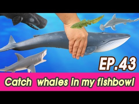 [EN] #43 Let's catch whales in my fishbowl (kids education, Collecta figure) [cocostoy]