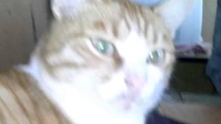кот пердит