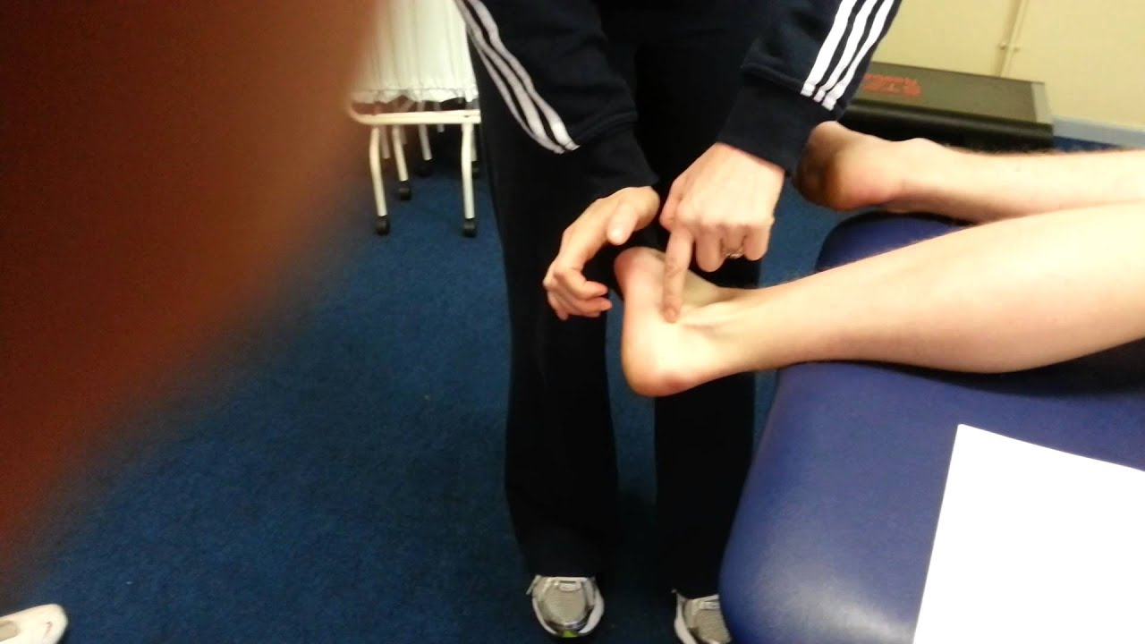 Peroneus Longus and Brevis - YouTube