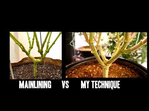 WATTS OR PAR? MAINLINING CANNABIS PLANTS, GROWING DENSE BUDS - Q&A #2
