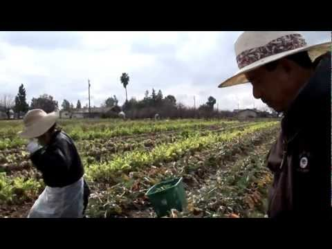 Growing California video series: Exotic Greens