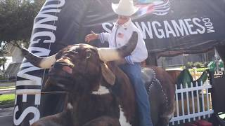 Real Simulator of rodeo Mechanical Bull Riding Big Size By Show Games