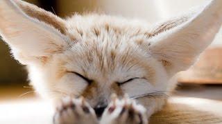 Смешные животные животные вместо любых антидепрессантов  Смешное видео