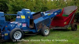 Récolte de la noisette en Lot-et-Garonne