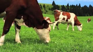 Un Savoureux Voyage au Pays du Comté - 2012 - Episode 4.1 -