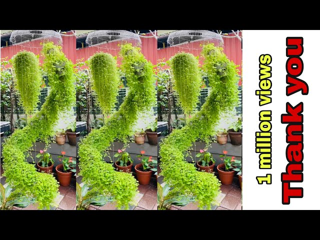 Plants Hanging Ideas With Coconut Shells Spiral Hanging Garden Amazing Vertical Hanging Garden Ideas Youtube