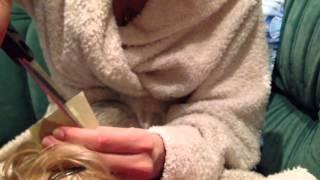 Клеим уши йорку(пример показан на взрослой собаке., 2014-05-05T19:04:09.000Z)
