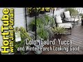 'Color Guard' Yucca - Winter Container Plants