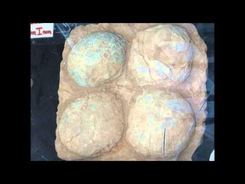 Ornithopod Dinosaur Egg Fossils, Moab, Utah