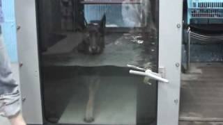 """Dog Exercise With Super Fit Fido Club """"pool Vs Underwater Treadmill"""""""