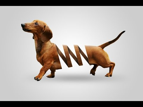 photoshop tutorial effects photo - dog cut
